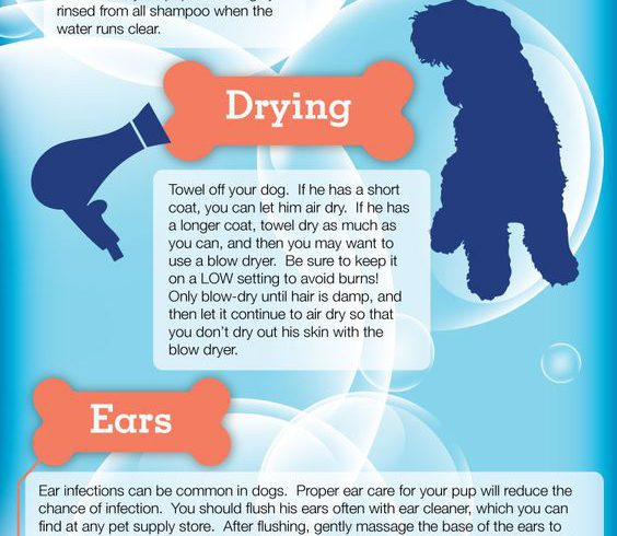 Dog Grooming – Tips and Tricks